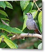 Gray Catbird Metal Print