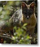 Gray Fox In The Woods Metal Print