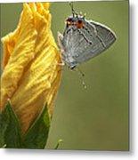 Gray Hairstreak Butterfly Metal Print