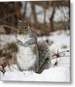 Gray Squirrel In Snow Metal Print
