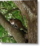 Gray Squirrel Metal Print