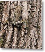 Gray Tree Frog Metal Print
