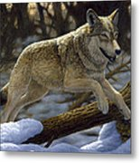 Gray Wolf - Just For Fun Metal Print