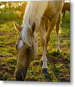 Grazing At Sunset Metal Print