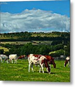 Grazing Cows Metal Print