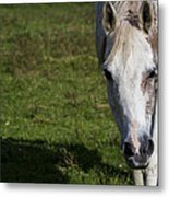 Grazing Horse Metal Print