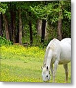 Grazing In Golden Fields Metal Print