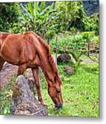 Grazing In Paradise Metal Print