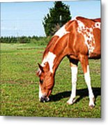 Grazing In Style Metal Print