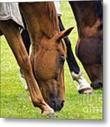 Grazing In Sync Metal Print