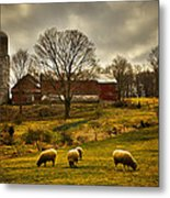 Grazing North South East And West Metal Print