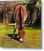 Grazing With An Attitude Metal Print