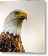 Great American Bald Eagle Homer Alaska Metal Print by Natasha Bishop