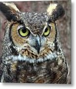 Great And Horned Metal Print by Skip Willits