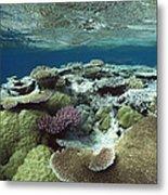 Great Barrier Reef Near Port Douglas Metal Print
