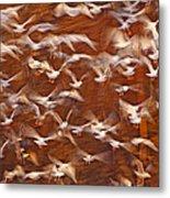 Great Black-backed Gulls Metal Print