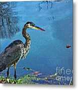 Great Blue Along The Canal Metal Print