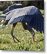 Great Blue Dining Out Metal Print