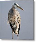 Great Blue Heron 2 Metal Print