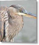 Great Blue Heron 4 Metal Print