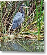 Great Blue Heron 9 Metal Print