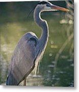Great Blue Heron At Sunset  Metal Print