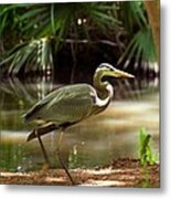 Great Blue Heron By Pond Metal Print
