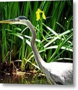 Great Blue Heron By Yellow Flower Metal Print