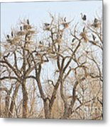 Great Blue Heron Colony Metal Print