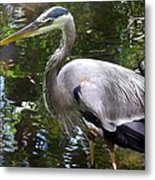 Great Blue Heron - Colorful Reflections Metal Print