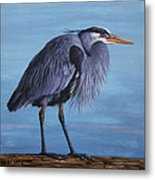 Great Blue Heron Metal Print by Crista Forest