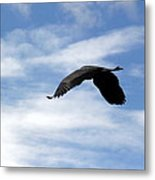Great Blue Heron Flying Past The Clouds Above Trojan Pond 2 Metal Print