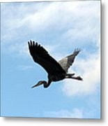 Great Blue Heron Flying Past The Clouds Above Trojan Pond Metal Print