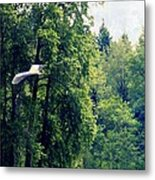 Great Blue Heron Flying Past The Trees Above Trojan Pond 2 Metal Print