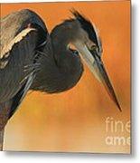Great Blue Heron Focus Metal Print
