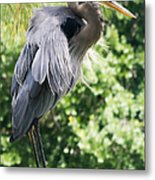 Great Blue Heron IIi Metal Print