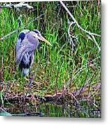 Great Blue Heron In Nature Metal Print
