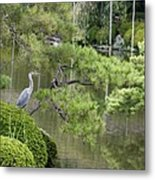 Great Blue Heron In Pond Kyoto Japan Metal Print