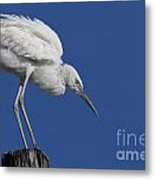 On Top Of The World... Pole Metal Print