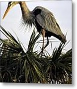 Great Blue Heron On Palm Metal Print