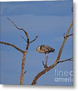 Great Blue Heron Perched On Branch Metal Print