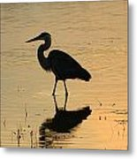 Great Blue Heron Reflected Metal Print