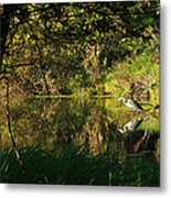 Great Blue Heron Reflecting Metal Print by James Hammen