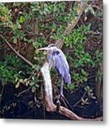 Great Blue Heron Resting Metal Print