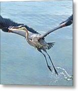 Great Blue Heron Take Off Metal Print