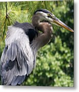 Great Blue Heron Vi Metal Print