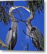 Great Blue Herons Metal Print