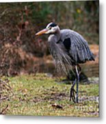 Great Blue On The Clinch River IIi Metal Print