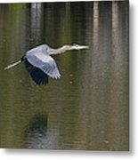 Great Blue Over Green Metal Print
