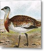 Great Bustard Metal Print